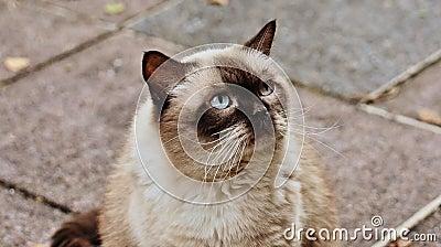 Brown Long Coated Cat Free Public Domain Cc0 Image