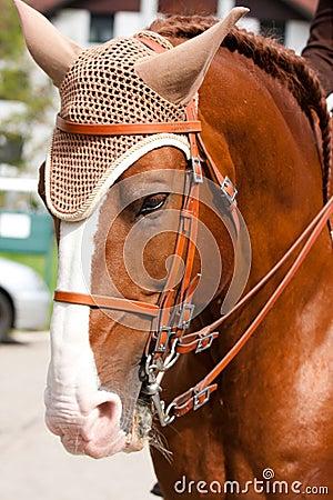 Free Brown Lusitano Horse Royalty Free Stock Image - 26614076
