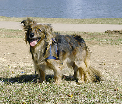 Brown mixed breed dog 2