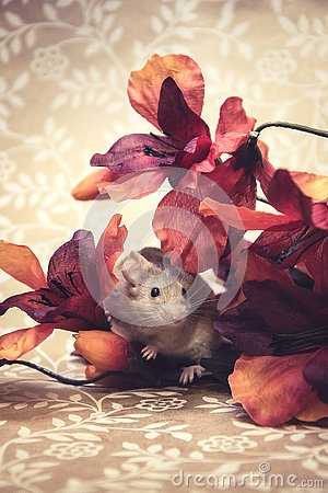 Free Brown Mouse Fall Colors Royalty Free Stock Image - 140623016