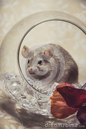 Free Brown Mouse Fall Colors Glass Orb Stock Photos - 140623003