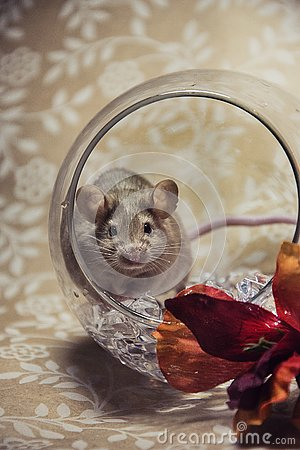 Free Brown Mouse Fall Colors Glass Orb Stock Photo - 140623020