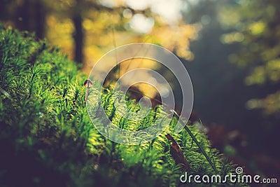 Brown Mushroom In Green Grass Free Public Domain Cc0 Image