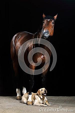 Brown-Pferd und Hund auf dem schwarzen Hintergrund
