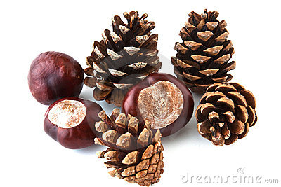 Brown pine cones scattered on a white background
