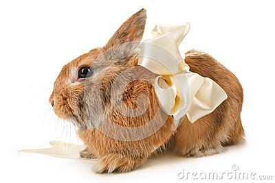 Brown rabbit with a beige bow