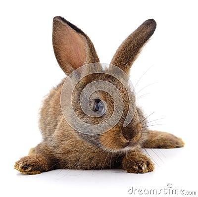 Free Brown Rabbit On White. Royalty Free Stock Photos - 102176648
