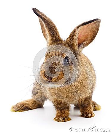 Free Brown Rabbit On White. Royalty Free Stock Image - 110968986