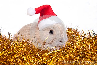 Brown rabbit in santa hat and christmas decoration