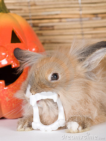 Brown rabbit with vampire teeth