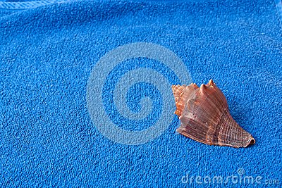 Brown seashell on a blue towel