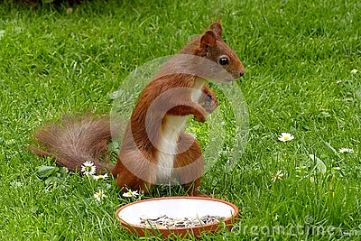 Brown Squirel Standing Free Public Domain Cc0 Image
