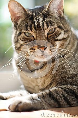Brown tabby cat sits near a window