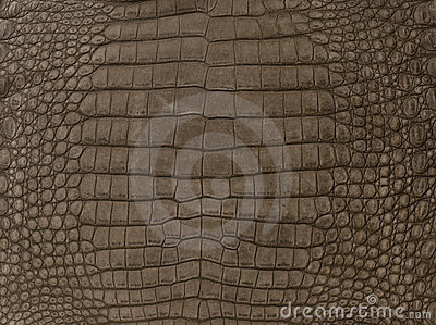 Brown textured crocodile skin