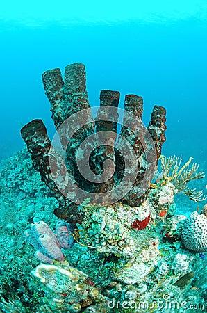 Brown tube sponges