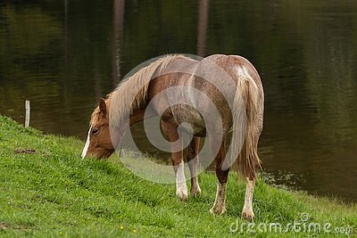 Brown And White Foot Horse Free Public Domain Cc0 Image