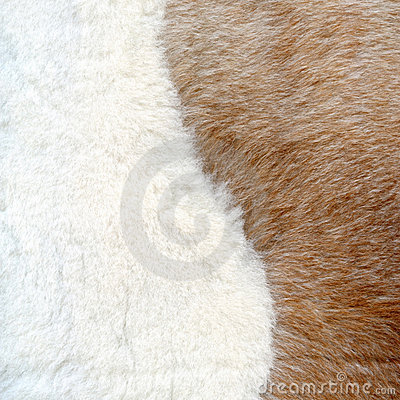 Brown and white fur texture