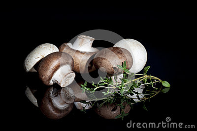 Brown and White Mushrooms