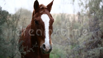 Brown wild horse. In nature stock video footage