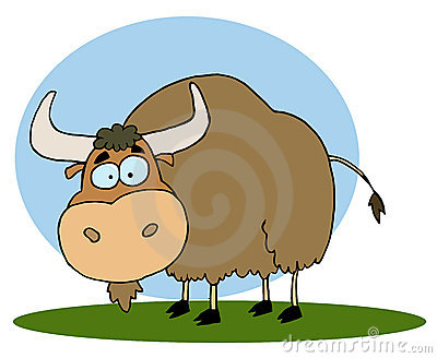 Brown yak on grass