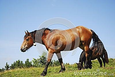 Browsing Horse