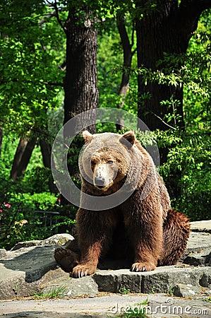 Bruin draag bij de dierentuin