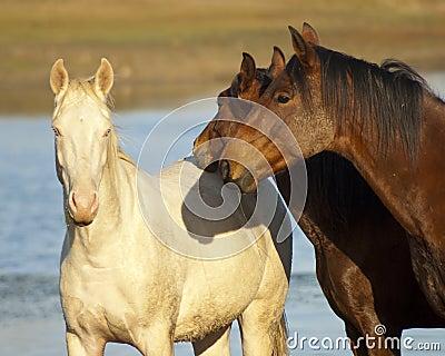 Bruine en witte paarden