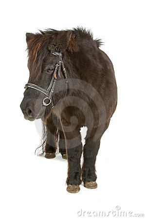 Bruine poney