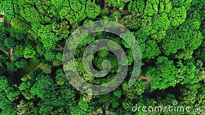 Brummen, das vorwärts über schöner grüner Wald-Luft-Überführung 4K topview Schuss fliegt stock footage