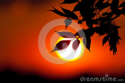 Brunch auf unfocused Sonnehintergrund