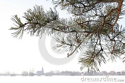 Brunch del pino