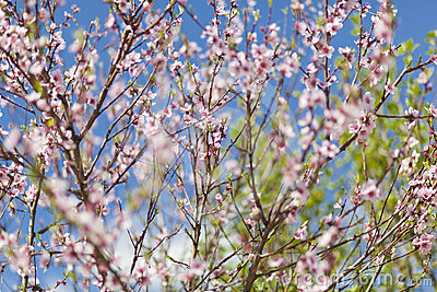 Brunch with flower - Spring background