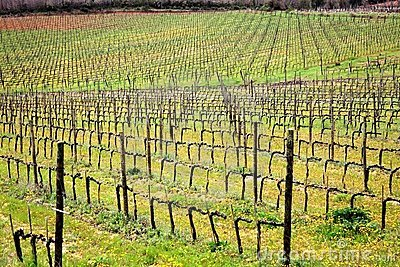 Brunello Di Montalcino Vineyards Royalty Free Stock Photography - Image: 14022277
