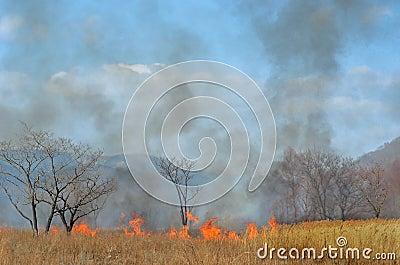 Brushfire 18