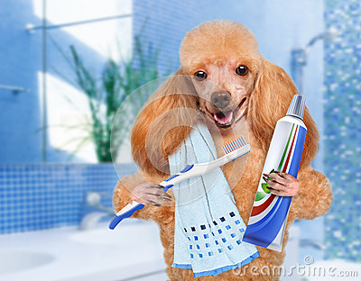 Brushing teeth dog