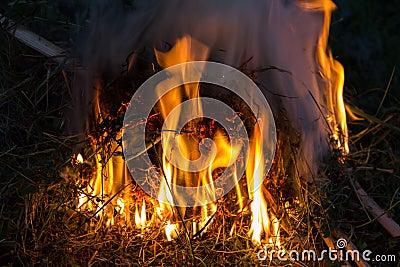Brushwood fire