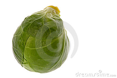 Brussel Sprout Macro