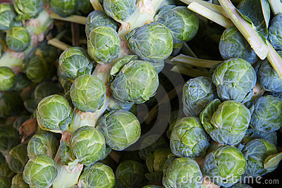 Brussel sprout stalks