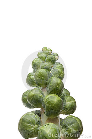 Brussel Sprout Stem