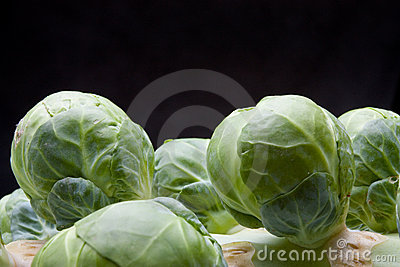 Brussel Sprouts Stem
