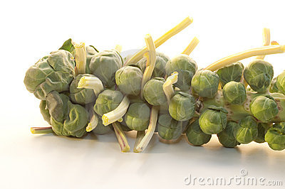 Brussel Sprouts on the stem