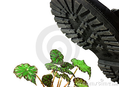 Brute military boots and plant