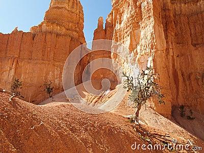 Bryce Canyon along Peekaboo trail