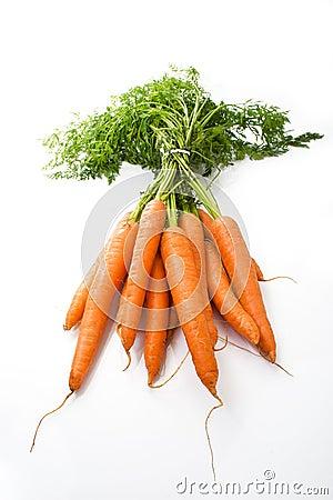 Büschel der Karotten