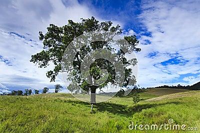 Btop Tree Meadow Hor