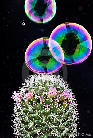Free Bubble And Cactus Stock Images - 18863184