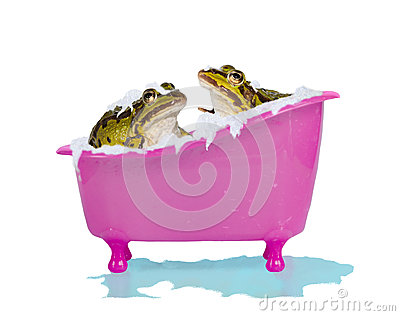 Bubble bath for pet frogs