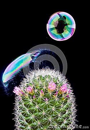 Free Bubble Bursting On Cactus Royalty Free Stock Images - 18318709