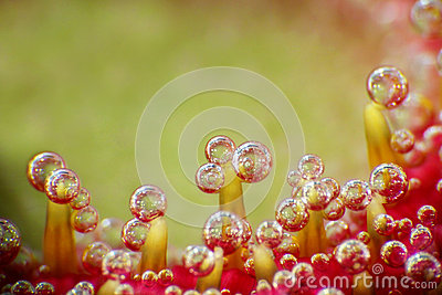 Bubbles on a flower