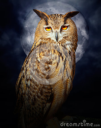 Bubo bubo eagle owl night bird full moon